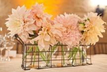 Wedding Ideas / Planning my February Florida wedding! / by Amy Harvey