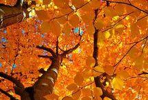 autumn... ma saison preferee :) / by Suzanne Michaud