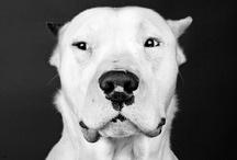 DOG~GOD / by April Doyle