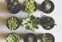 I ♥ gardens