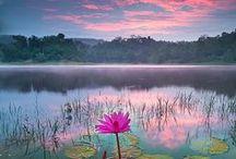 Beautiful / by Peggy (Dahlhoff) Maxwell