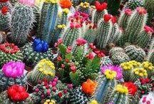 Blooming / by Four Seasons Resort Punta Mita