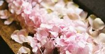 Florals //