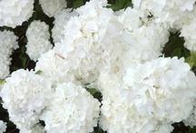 Flowers & Florist shop
