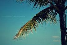vamos a la playa / I super Love summer