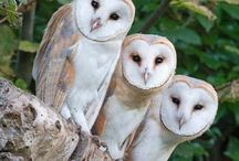 OWLS / by Wendy Jantz