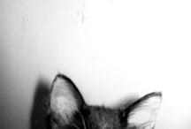 Purrrr / The smallest feline is a masterpiece. - Leonardo da Vinci / by Carly Hacker