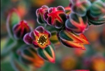 Flowers & Plants / by Loren Reyes