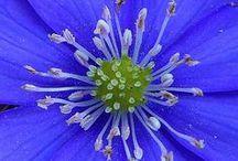 In My Garden 3 / by Ellen Jones