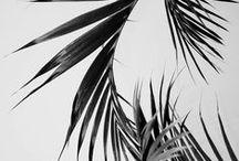 Palms / Palm inspiration