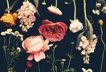 Floral inspirations / Flowers and foliage design and beauty