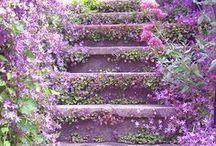 In the Garden / by Liz ♥