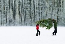 Holidays / by Brittney Fleenor