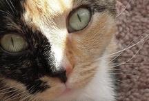 =^..^= Meow / by Amanda Kate