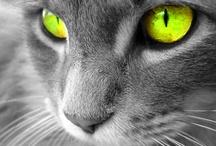 carpoos • Animals / by carpoos .com