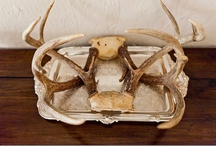 All Things Antlers / by Jackie Haddad