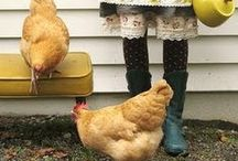 the CHICKEN {S}COOP / The scoop on the coop... and Chickens, hens, roosters, agriculture, and more.