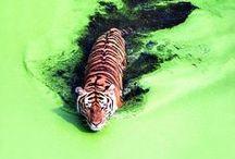 Inspiration - Animal Photography
