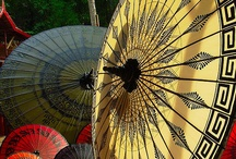 sunflowers / by Janke Elliott