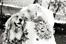 My dReAm WeDdInG iDeAs / Wedding / by Debbie Cowman