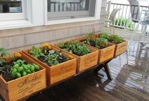 Garden & Outdoor living! / by Debbie Cowman