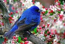 Birdies / by Bettye Ann Rogers