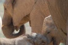 Cute Animals / by Bettye Ann Rogers