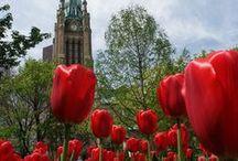 Toronto - Canadá / Lugares que visitar, clima, moda, tradiciones y fechas especiales. Todo lo que tienes que saber sobre Toronto.  / by Copa Airlines