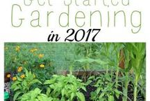 Gardening Tips / Gardening tips and tricks to improve your growing season and have a great harvest!
