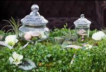 Apothecary Jars / by Luna Bazaar
