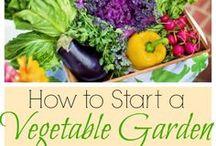 The Best of The Kitchen Garten / Gardening, baking, and cooking from The Kitchen Garten.