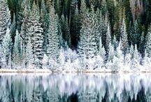 Winter Light / by Luna Bazaar