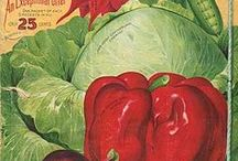 Vegetarian Bliss~ / Vegetarian recipes