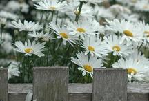 Gardens, Flowers & Tips / by Lynda Rave