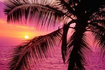 Palm Trees & Sunsets / by Dorothy Reed
