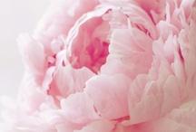 Flowers / by Mindy Geraci