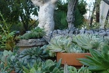 Cacti, Succulents & Bromeliads / by Janice Gammon