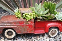 Succulents / by Mindy Geraci