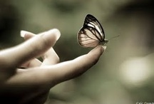 I Butterfly story I / journey of love, growth and transformation / by Saša