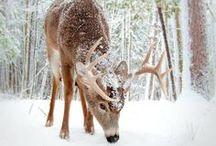 Winter Wonderland / Walking in a Winter Wonderland... Winter inspirations