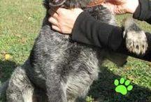 Cani da adottare / Su questa bacheca potete trovare tutti i cani che sono presenti al Canile di Rimini Stefano Cerni