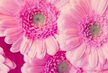 PRETTY FLOWERS / by Wilma