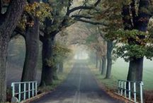 Autumn / by Donna Maryes