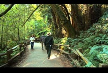 Exploring Redwoods / Fun stuff about getting out and exploring the majestic redwood forest!