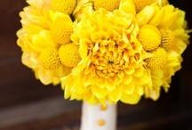 n&l's wedding flowers / by Heather Keeling