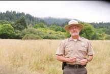Redwood Hero