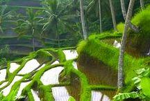 Bali / Voyage