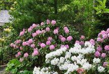 Gardening: Shade garden