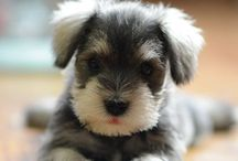 Puppies / by {Southwestgirl} Everyday Southwest