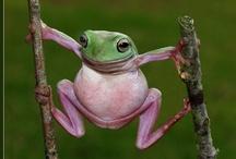 I L0VE FROGS -!!!- / <3<3<3<3<3<3<3<3<3<3<3<3<3<3<3<3<3<3 / by Nannette Serrano